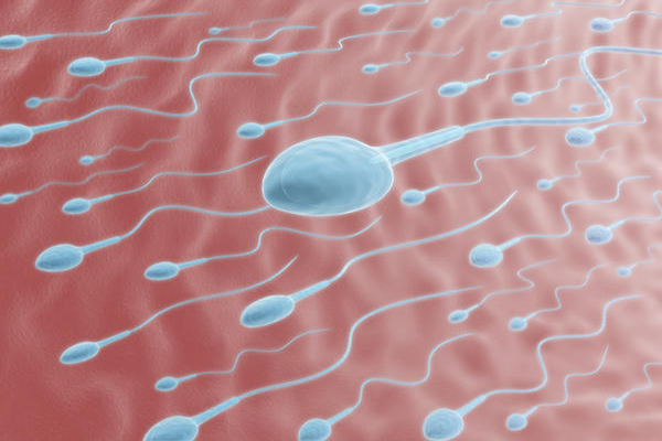 Comparative Study Of Sperm Motility In Metformin Using And